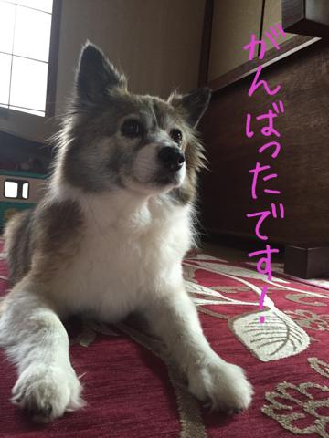 image-20150322205346.png