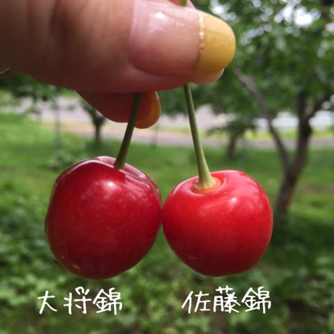 image-20150706161523.png